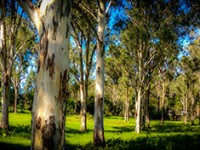 Land for Sale Central Coast, Lake Macquarie and Hunter Valley Regions